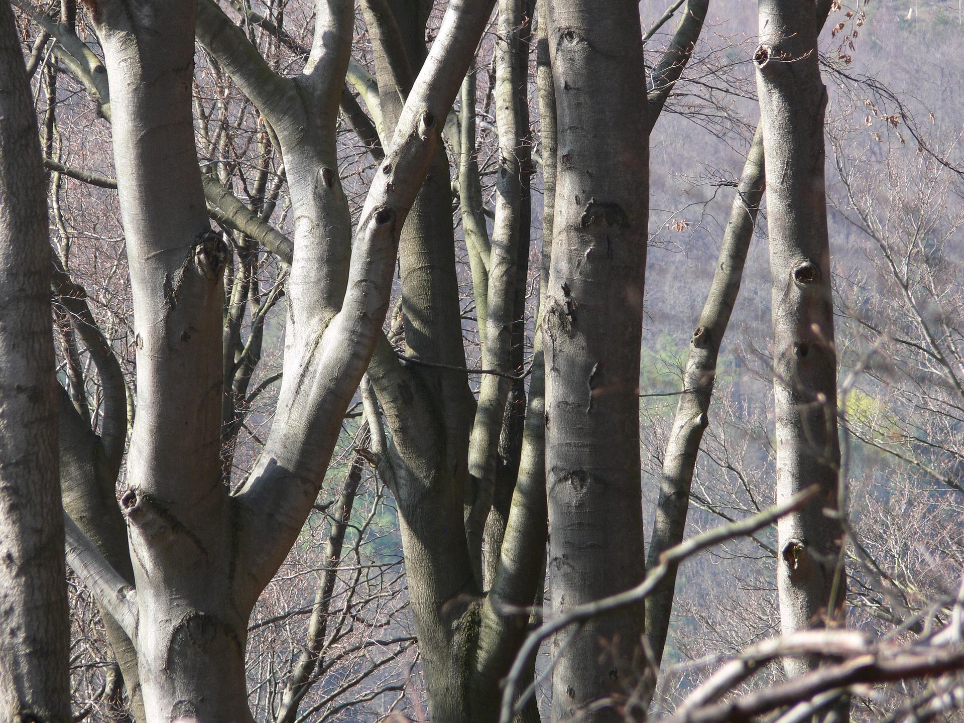 Das (geheime) Leben der Bäume – ein Waldgottesdienst