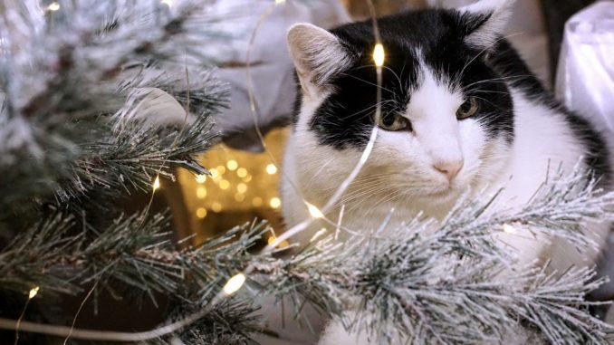 Bilder Weihnachten Tiere.Kreis Rät Zu Weihnachten Tiere Nicht Leichtfertig Verschenken