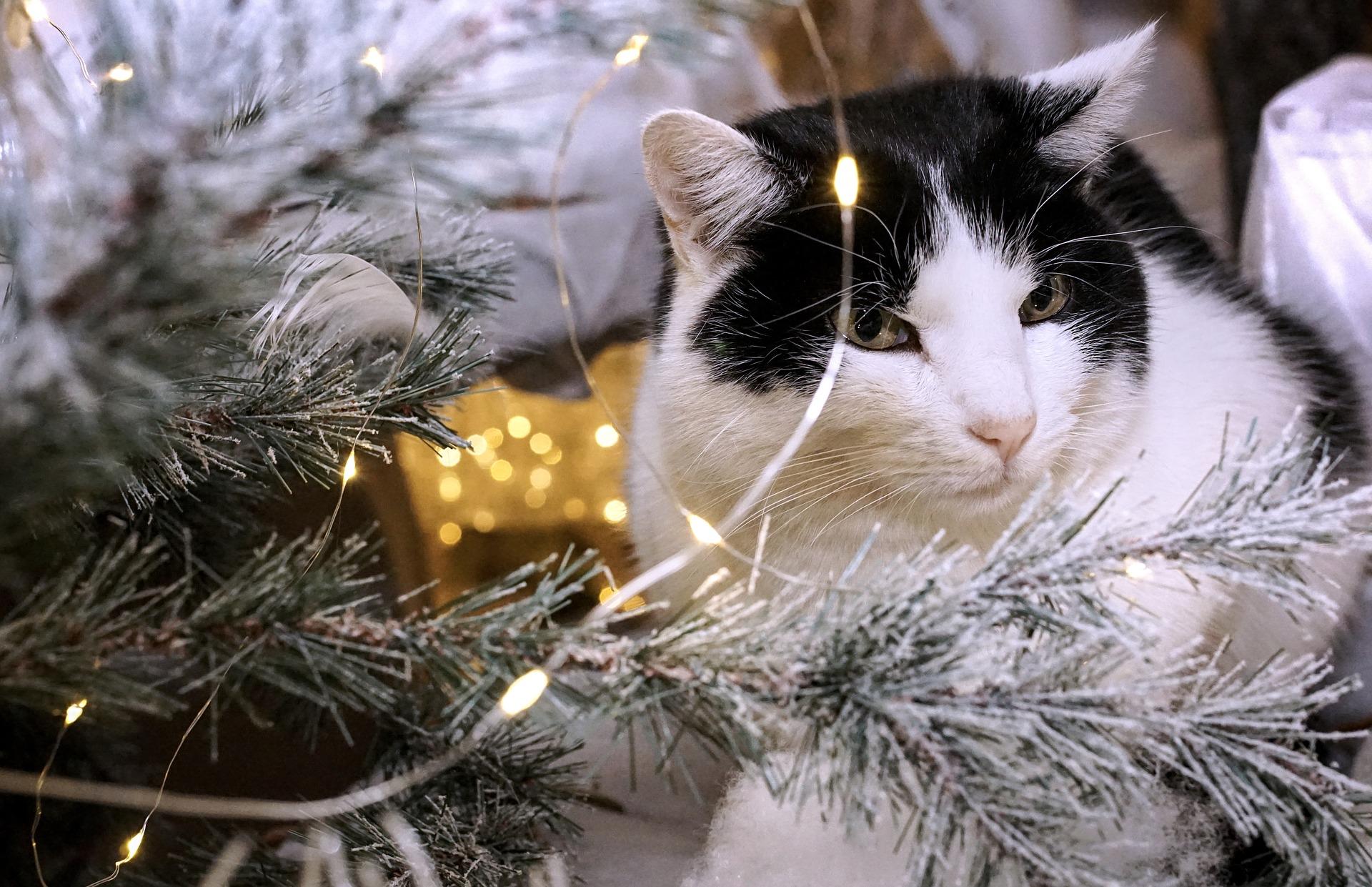 """Kreis rät zu Weihnachten: """"Tiere nicht leichtfertig verschenken"""""""