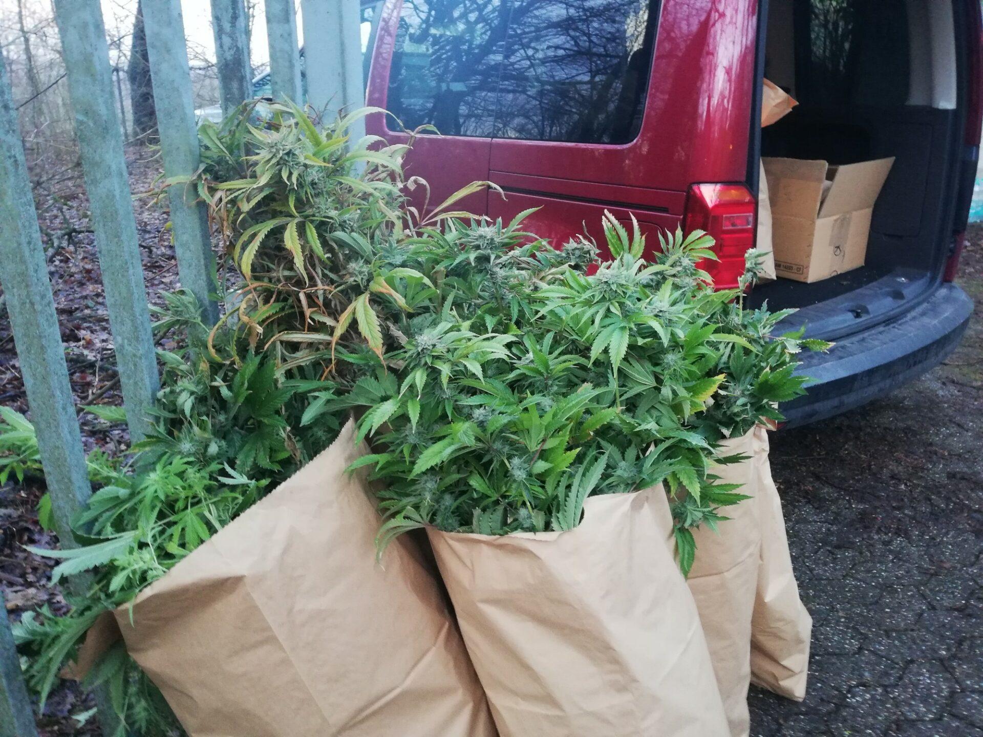 Cannabisplantage in Bunker entdeckt
