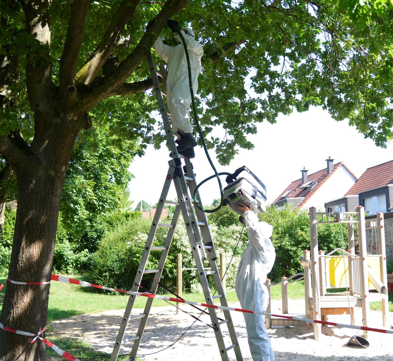 Eichenprozessionsspinner: Spielplatz in Geisecke ist gesperrt