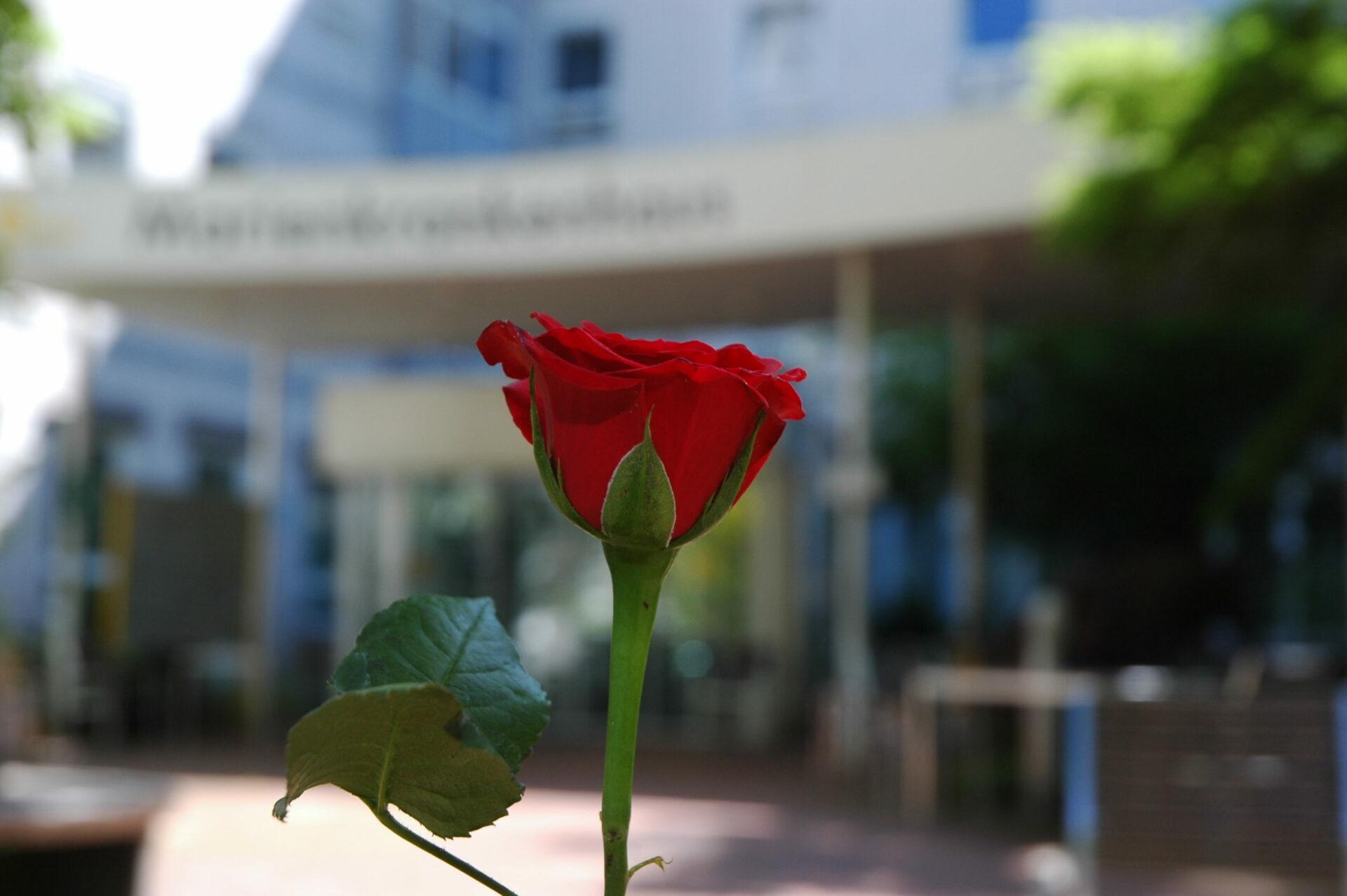 Blumengruß am Muttertag ins Krankenhaus