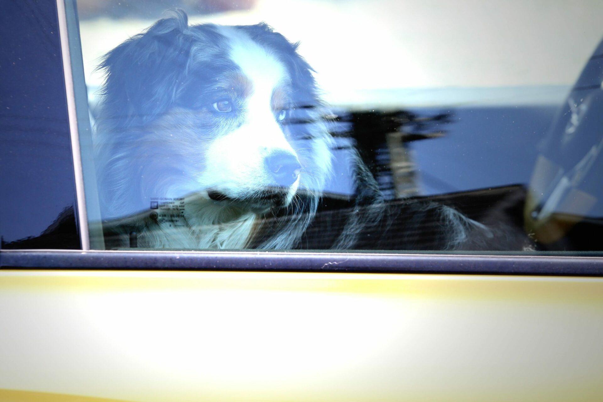 """Polizei: """"Lassen Sie Ihren Hund bitte nicht im Wagen!"""""""