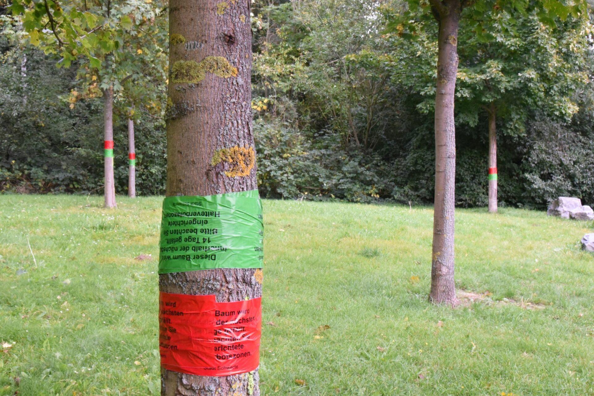 Im Reiche des Wassers: 22 Bäume werden gepflanzt, sechs müssen fallen